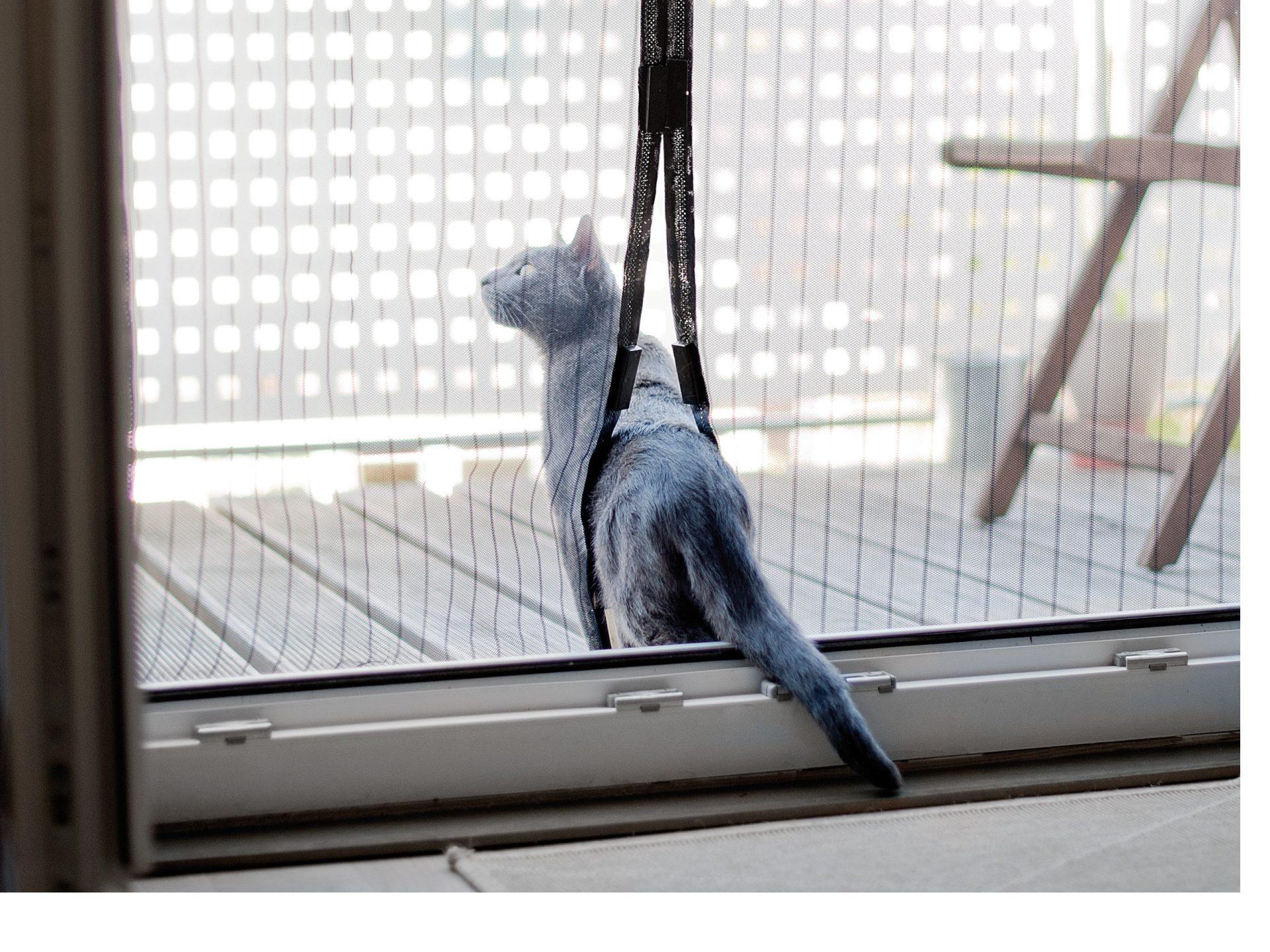 Um die unerwünschten Eindringlinge effektiv und dauerhaft auszusperren, müssen Fenster und Türen nicht ständig geschlossen bleiben.Foto: Pearl/TRD Haus und Garten