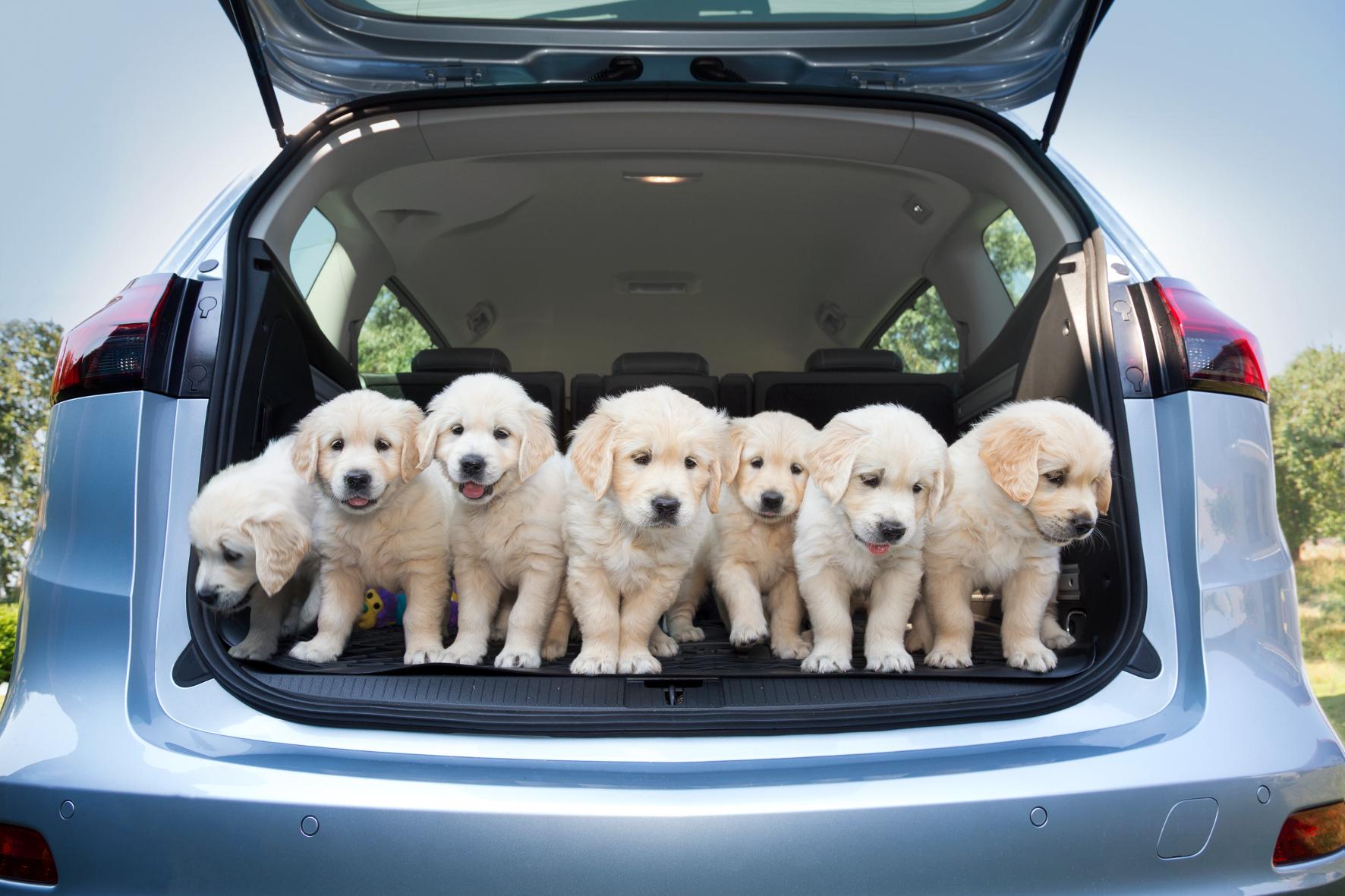 Opel auf den Hund gekommen