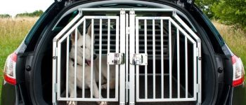 Hund im Transportsystem bei offenem Kofferraum