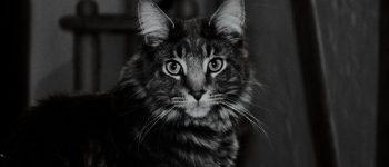 Eine Katze im Dunklen.